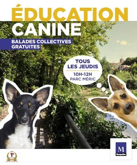 Balades d'éducation canine collectives