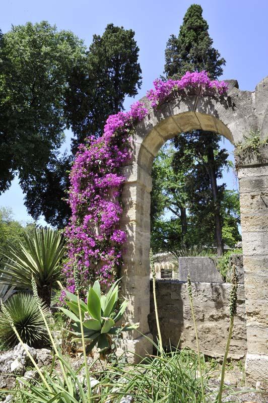 Le jardin des plantes ville de montpellier for Plantes fleuries de jardin