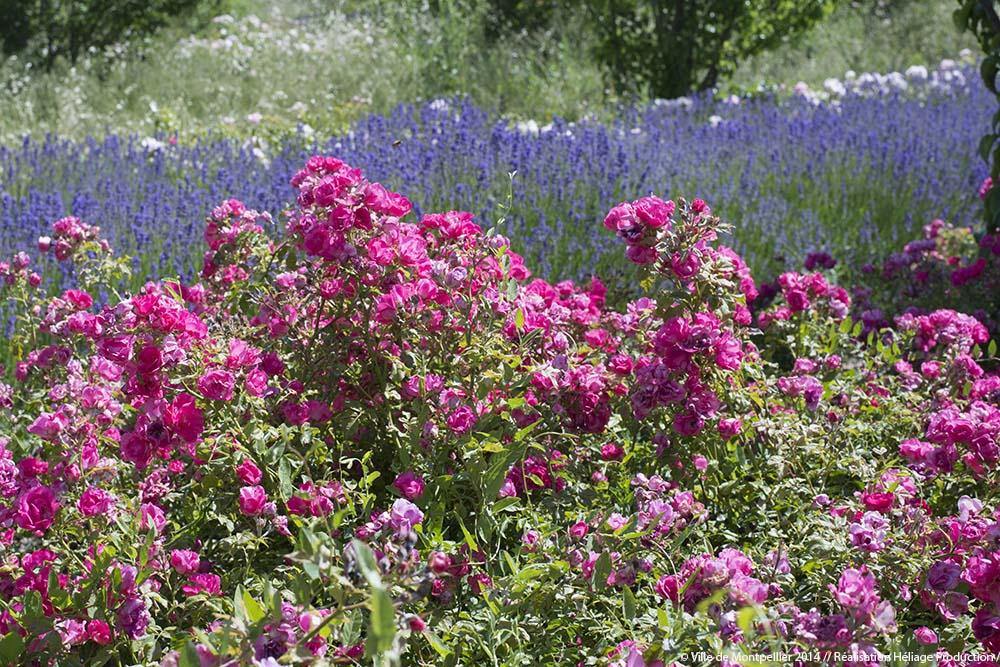 Parcs et jardins ville de montpellier - Terrasse et jardin en ville montpellier ...
