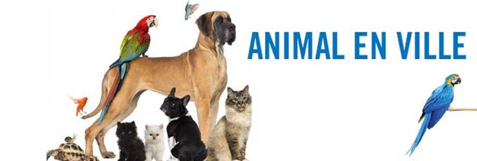 Rencontre des animaux
