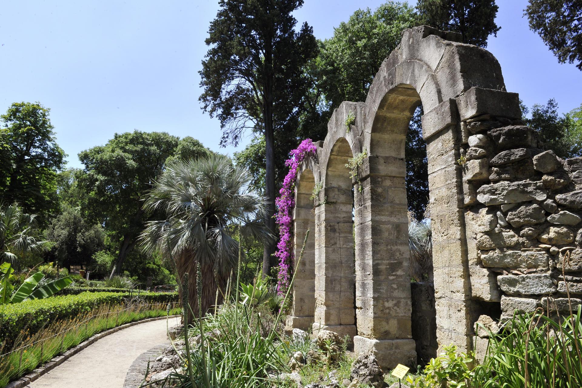 Ville de montpellier site de la mairie de - Jardin des plantes de montpellier ...